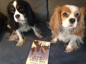 Dogs reading Call of the Wild