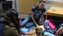 Student petting a dog