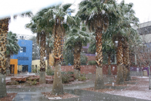 A historic (2011) winter photo of the CSN Charleston Campus